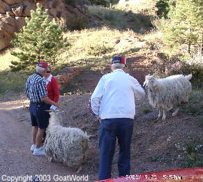 The Goats of Cripple Creek