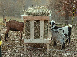 Do It Youself Goat Feeder