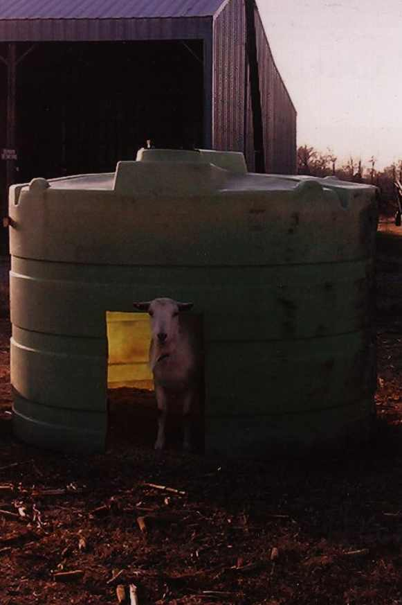 Metal Tank Shelters : Portable goat shelter