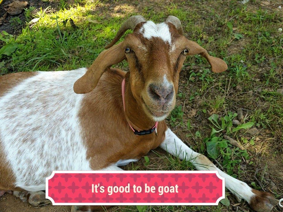 Welcome to GoatWorld - GOATWORLD.COM