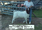 The GoatWorld Picture Show